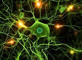 Un creier, doua minti – Factorul critic