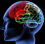 Ce (ne) facem cu cele trei creiere pe care le-avem?!